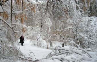 Park Winter Snow 1292 x 900 340x220