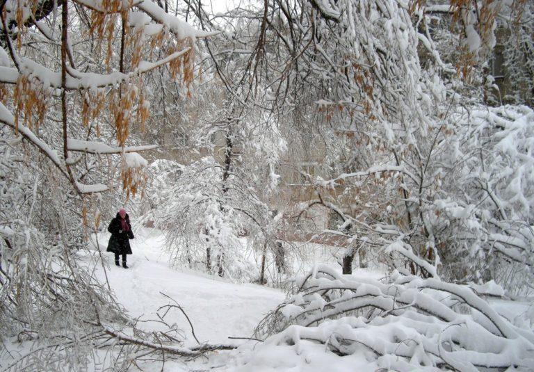 Park Winter Snow 1292 x 900 768x535
