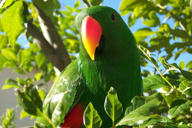 Parrot Wallpapers 01 2580 x 1720 768x512