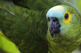 Parrot Wallpapers 05 1920 x 1080 340x220