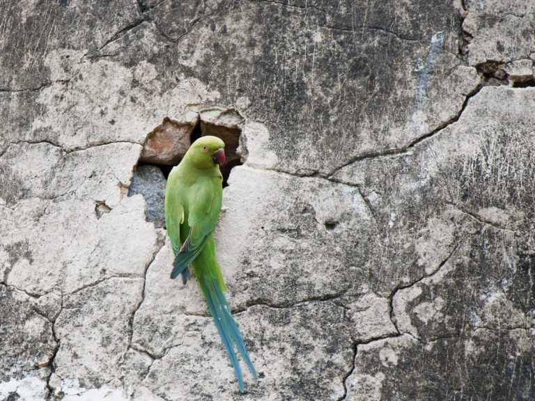 Parrot Wallpapers 06 1600 x 1200 768x576
