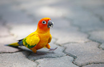 Parrot Wallpapers 13 1920 x 1200 340x220