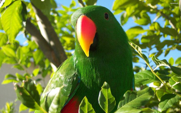 Parrot Wallpapers 22 2560 x 1600 768x480