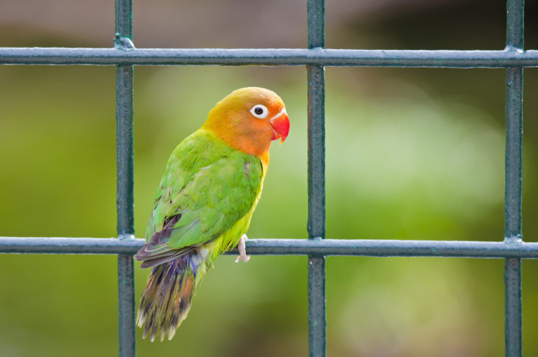 Parrot Wallpapers 25 2048 x 1357 768x509