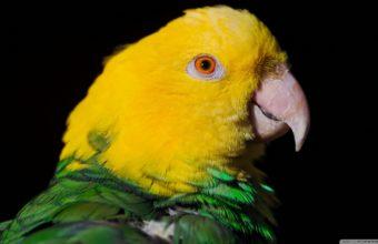 Parrot Wallpapers 33 2560 x 1440 340x220
