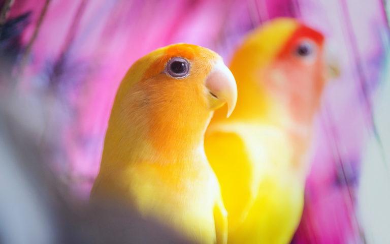 Parrot Wallpapers 35 1920 x 1200 768x480