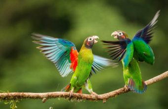 Parrot Wallpapers 37 4100 x 2307 340x220