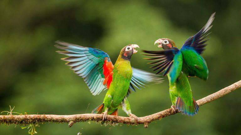 Parrot Wallpapers 37 4100 x 2307 768x432