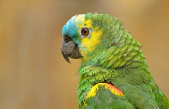 Parrot Wallpapers 40 2048 x 1365 340x220