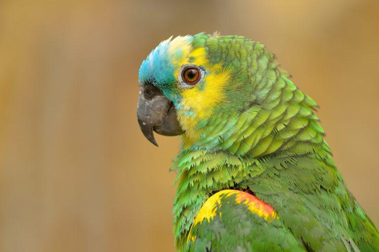 Parrot Wallpapers 40 2048 x 1365 768x512