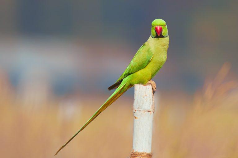 Parrot Wallpapers 42 2048 x 1365 768x512