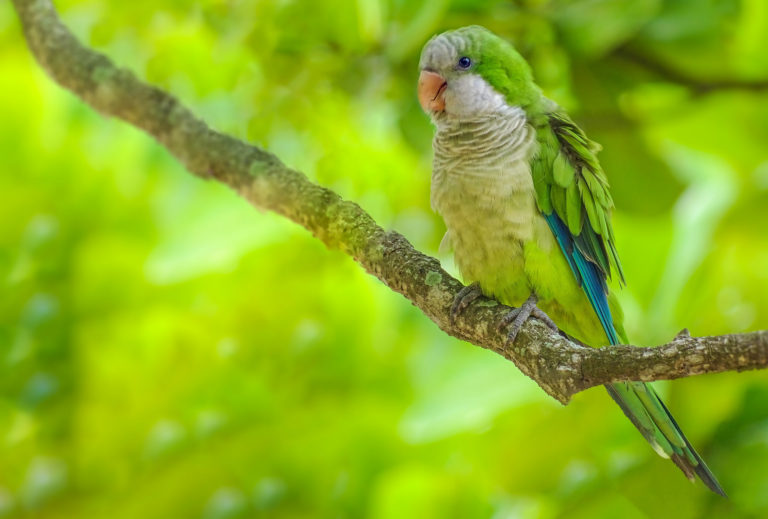 Parrot Wallpapers 44 2048 x 1385 768x519