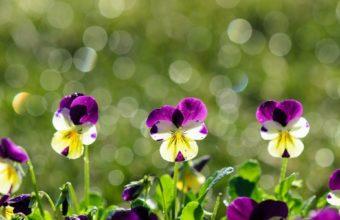 Petals Macro Flowers Purple Plants 1920 x 1200 340x220