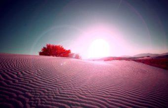 Pink Desert 2560 x 1600 340x220