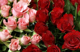 Pink Red Roses Bouquet Wallpaper 1920 x 1200 340x220