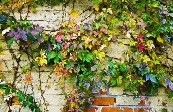 Plants Wall Painting Brick 2689 x 1800 340x220
