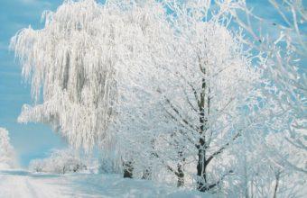 Pure Winter 2362 x 1732 1 340x220