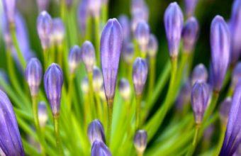 Purple 1080p Flower 1920 x 1080 340x220