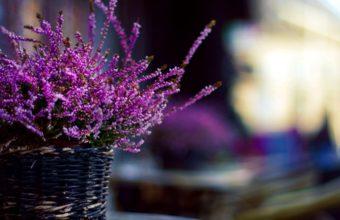Purple Flowers 2040 x 1494 340x220