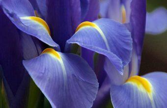 Purple Great Flower 1280 x 1024 340x220