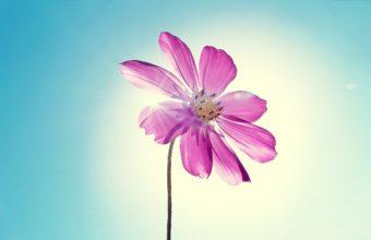 Purple Magenta Flower 2560 x 1600 340x220