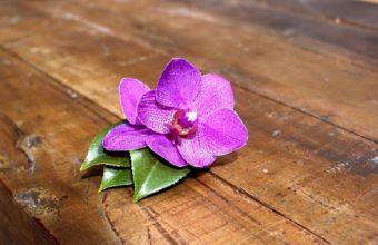 Purple Orchid 1920 x 1200 340x220