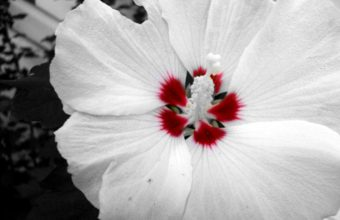 Red And White Flower 2560 x 1920 340x220