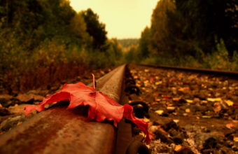 Red Leaf On Railroad 1920 x 1440 340x220