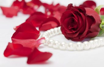 Red Rose Pearls 1920 x 1080 340x220