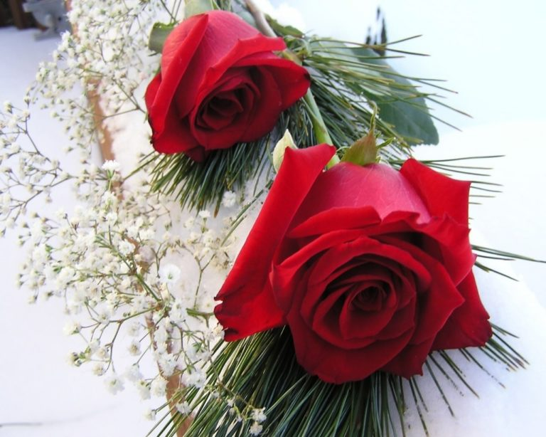 Red Roses 1280 x 1024 768x614