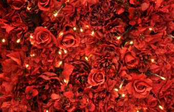 Red Roses Lights 2560 x 1600 340x220