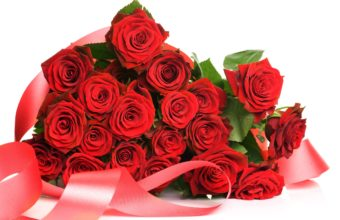 Red Roses Pack 2560 x 1600 340x220
