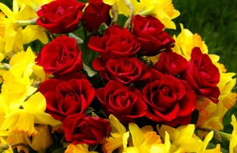 Red Roses Yelow Daffodils 1920 x 1285 340x220