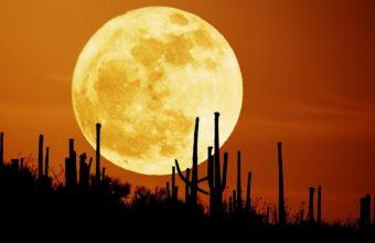 Rising Moon 1680 x 1050 340x220