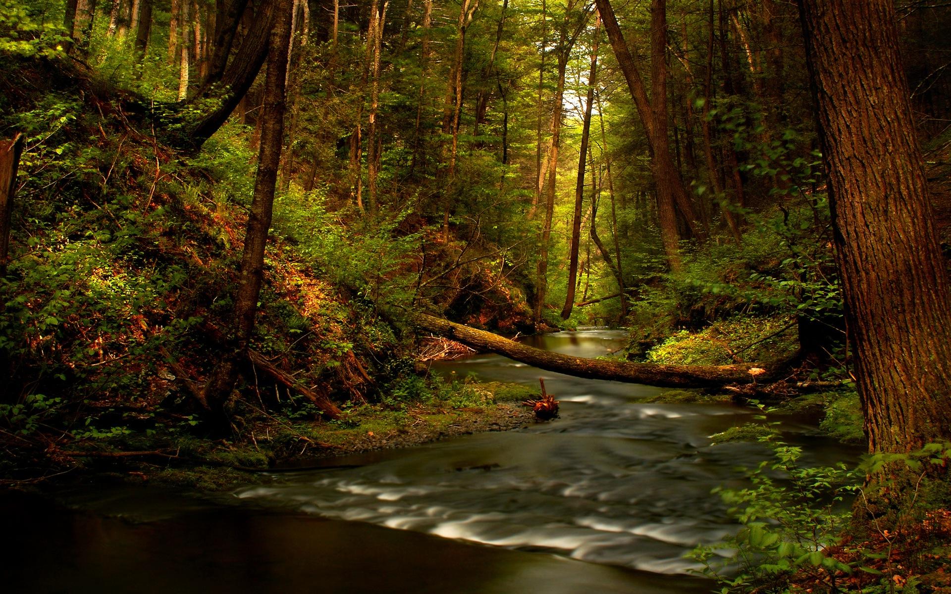 река лес  № 2789156 загрузить