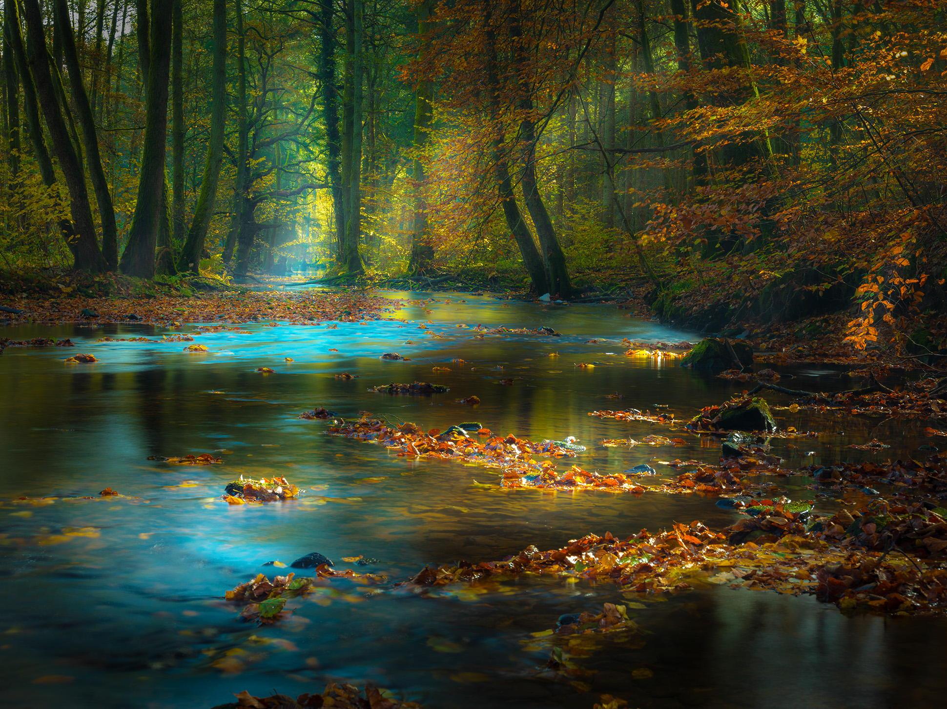 речка осень лес лучи загрузить