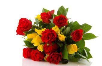 Rose Flower Red 2628 x 1749 340x220