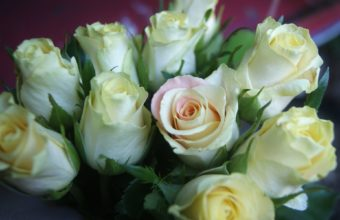 Roses Bouquet White 1920 x 1200 340x220