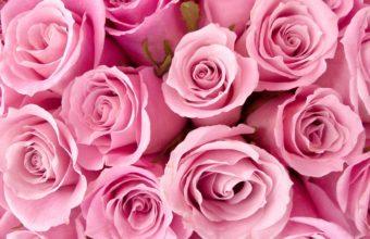 Roses Flower Petals 1920 x 1080 340x220