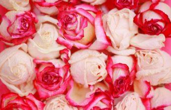Roses Flowers Petals 1920 x 1280 340x220