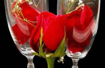 Roses Gypsophila Petals 1280 x 1024 340x220