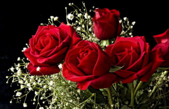 Roses Red Flowers Bouquet 2436 x 1695 340x220