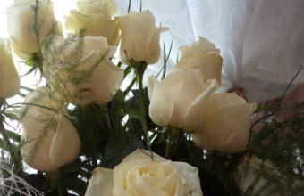 Roses White 2048 x 1536 340x220
