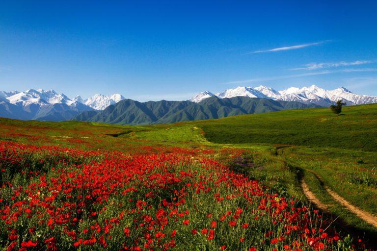 Scenery Mountains Fields Poppies 3072 x 2048 768x512