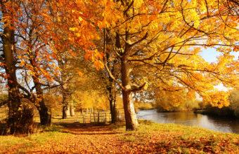 Scotland Autumn River Fall 2560 X 1600 340x220