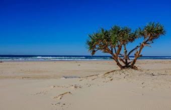 Sea Beach Palm Tree Landscape Ocean 2560 x 1600 340x220