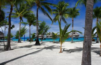 Sea Beach Palm Trees Bungalows 2560 x 1600 340x220
