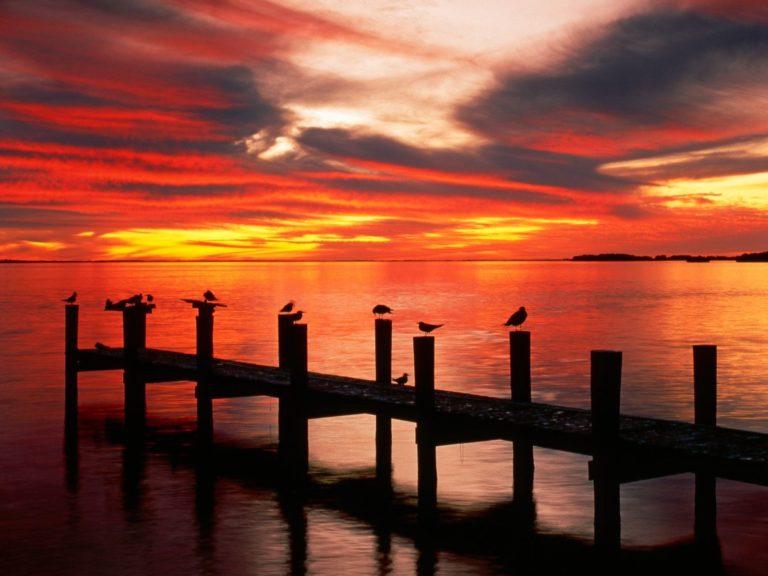 Seagulls At Sunset Florida 1600 x 1200 768x576