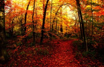 Seasons Autumn Forests Trail Nature 2048 X 1366 340x220