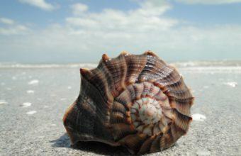 Shell On Beach Sand 2400 x 1610 340x220